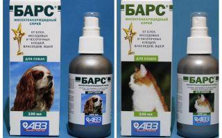 Spray Bars von Flöhen für Katzen und Hunde