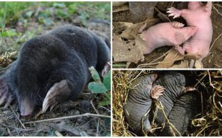 Beschreibung und Fotos von neugeborenen Muttermalen