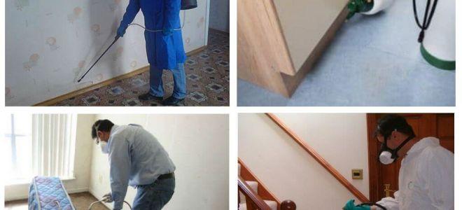 Entwesung von Flöhen in der Wohnung durch professionelle Dienstleistungen