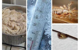 Bei welcher Temperatur sterben Läuse und Nissen?