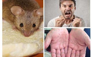 Was kann von Mäusen infiziert werden