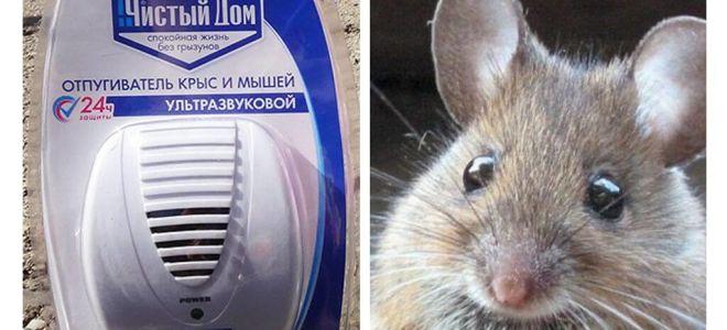 Ultraschall-Repeller von Ratten und Mäusen Sauberes Haus