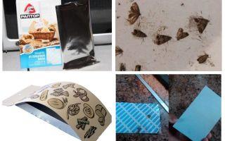 Lebensmittel Mottenfallen