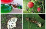 Was Ameisen in der Natur essen