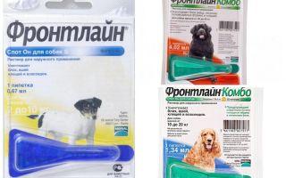 Drops Frontline von Flöhen für Hunde