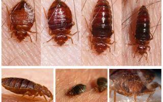 Was Käfer essen und wer sie isst