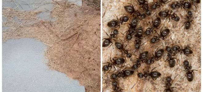 Wie man Ameisen am Grab loswird
