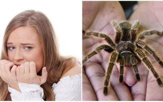 Wie heißt die Angst vor Spinnen (Phobie) und Behandlungsmethoden?