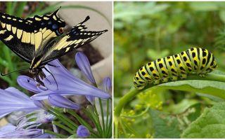 Eine Raupe in einen Schmetterling verwandeln