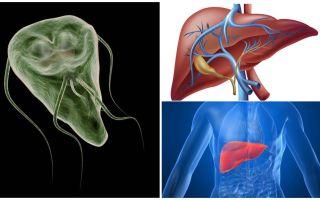 Giardia in der Leber - Symptome und Behandlung