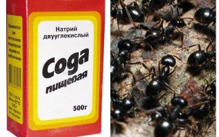 Soda gegen Ameisen im Garten