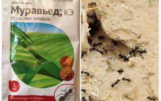 Ameisenmittel Anteater Anleitung und Bewertungen