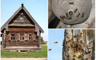 Wie man die Bienen aus dem Holzhaus und anderen Orten holt