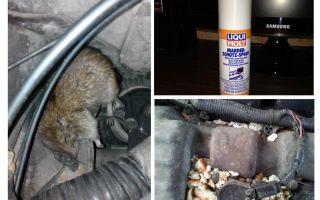 Sprühen Sie Ratten für das Auto