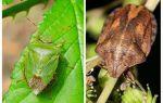 Ob Homebugs oder Wanzen riechen