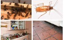 Kakerlaken in der Wohnung ein für allemal loswerden