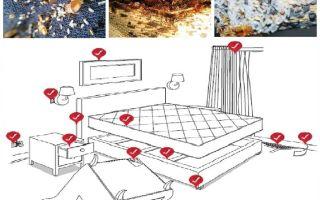 Wie man eigenständig mit Wanzen in der Wohnung umgeht