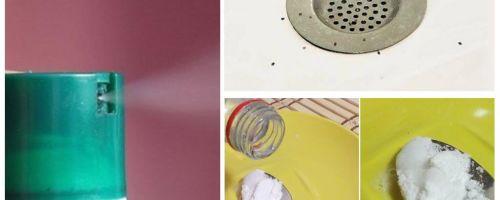 Wie man Mücken in der Wohnung loswird