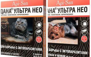Dana Ultra Neo fällt aus Flöhen für Katzen und Hunde