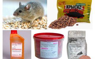 Das beste Mittel für Mäuse