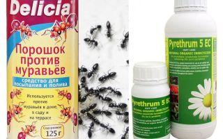 Ameisengift in einer Wohnung oder einem Haus