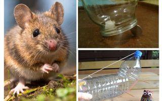 Wie man eine Maus in einem Haus ohne Mausefalle fängt