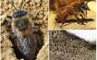 Wie man Erdbienen von der Site entfernt