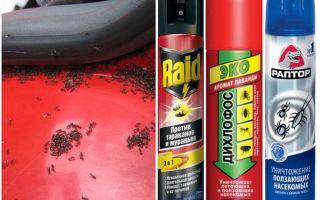 Wie man Ameisen aus dem Auto holt