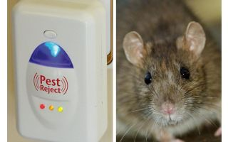 Pest Redzhet Ultraschall Repeller Nagetiere und Insekten