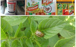 Die effektivsten Gifte und Gifte vom Kartoffelkäfer