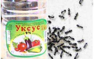 Essig gegen Ameisen im Garten