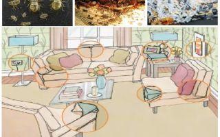 Was und wie man Insekten zu Hause vergiftet