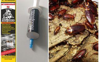 Bedeutet Dohloks von Kakerlaken