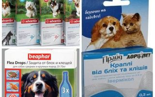 Floh- und Zeckenmittel für Hunde