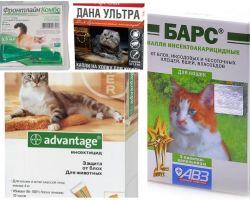 Tropfen auf den Widerrist von Flöhen für Katzen und Kätzchen