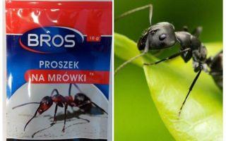 Mittel werfen Ameisen