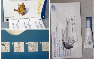 Die besten Tropfen auf den Widerrist für Katzen von Flöhen und Würmern