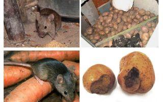 Wie man Mäuse aus dem Keller holt
