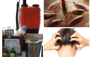 Was ist ein Anti-Pedikulose-Kit?
