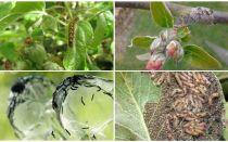 Wie man Raupen auf einem Apfelbaum loswird