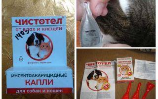 Tropfen Schöllkraut von Flöhen für Katzen und Hunde