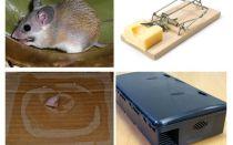 Wie man Mäuse von einem privaten Haus entfernt