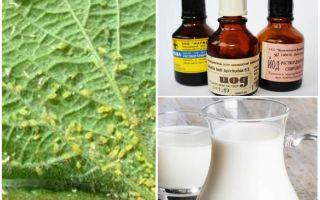 Milch mit Jod von Blattläusen