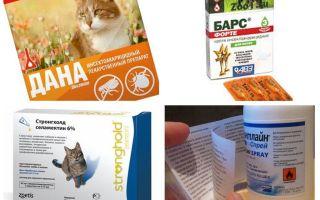 Die besten Flohmittel für Katzen