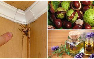 Methoden und Werkzeuge für Spinnen in einer Wohnung oder einem privaten Haus