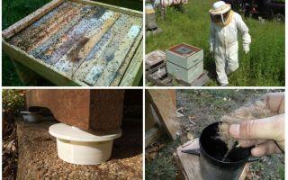Wie man Ameisen in den Imbißvolkmitteln loswird