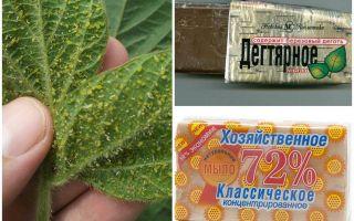 Teer und Haushaltsseife von Blattläusen auf Pflanzen