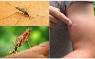 Was tun, wenn Sie von einer Anophelesmücke gebissen werden