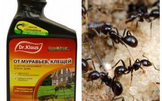 Dr. Klaus von Ameisen und Zecken