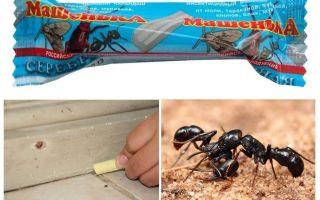 Pencil Mascha von Ameisen